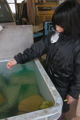 米づくり 2011 浸漬