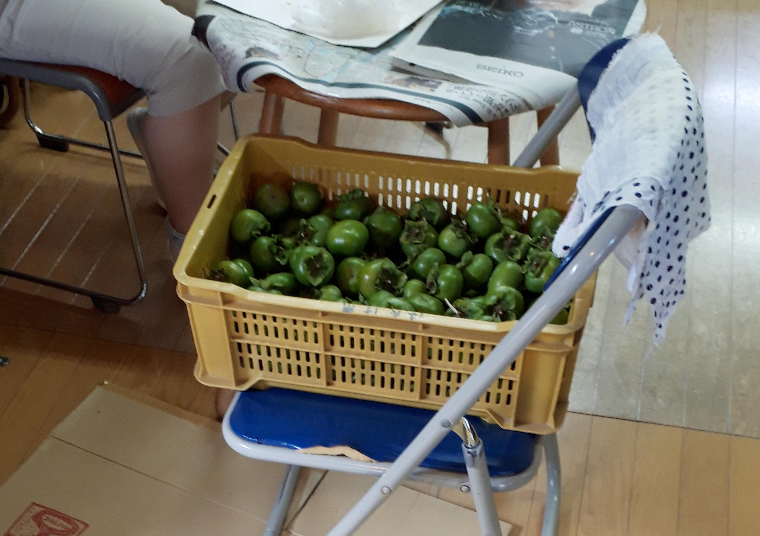 柿渋とり、始めました:画像