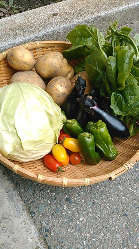 今 夏野菜が旬を迎えています