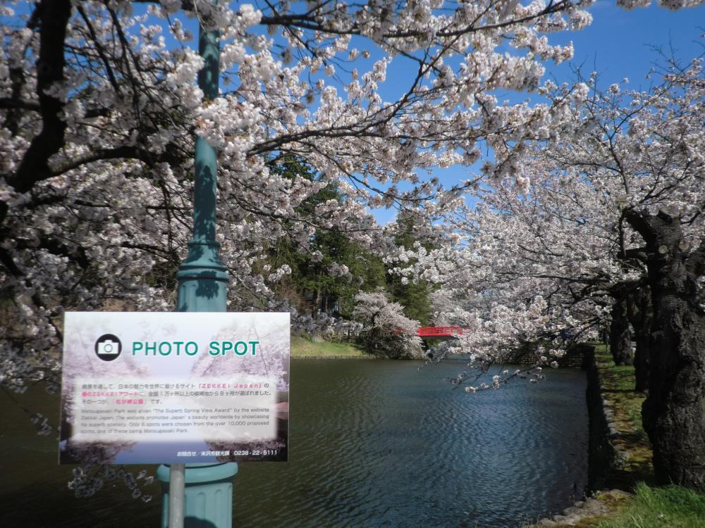 お花見に!写真撮影に!松が岬公園の桜が見ごろです!!