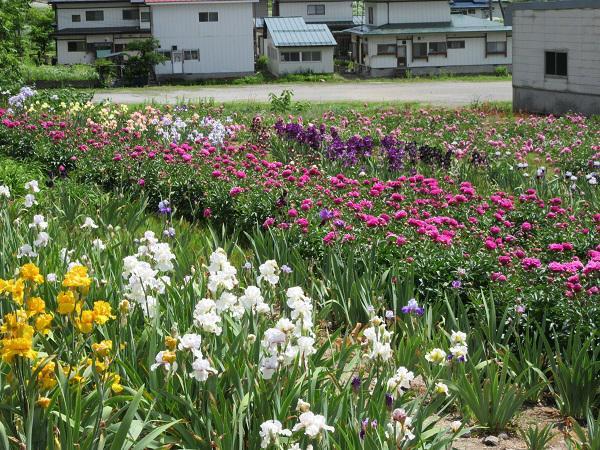 小野川小町花公園オープン!!