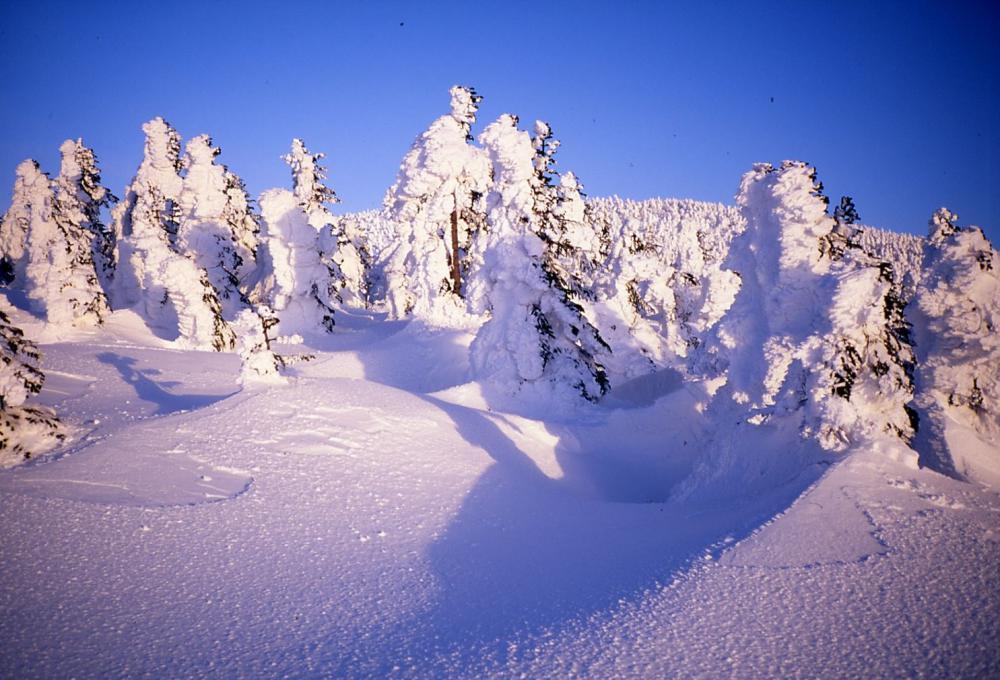 天元台高原 「樹氷鑑賞リフトハイキング」:画像