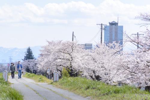 【タクシー/サイクリング】春のオススメツアー企画
