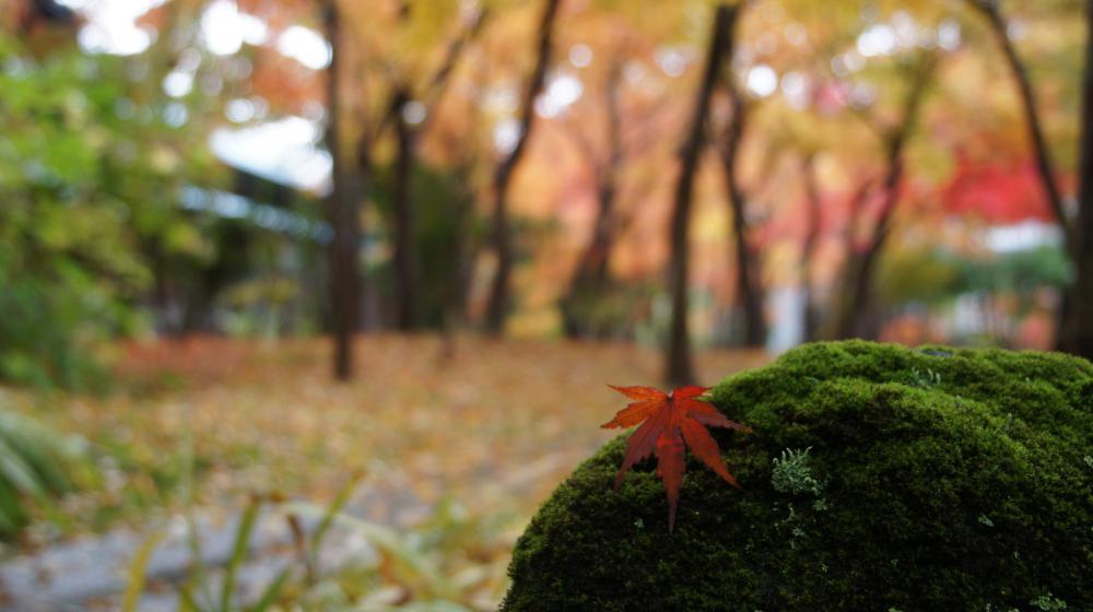 Yamase-Gura Museum [autumn opening information]: Image
