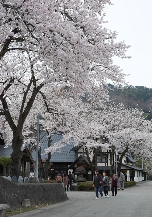 山寺《山寺風雅の国の桜》山形市