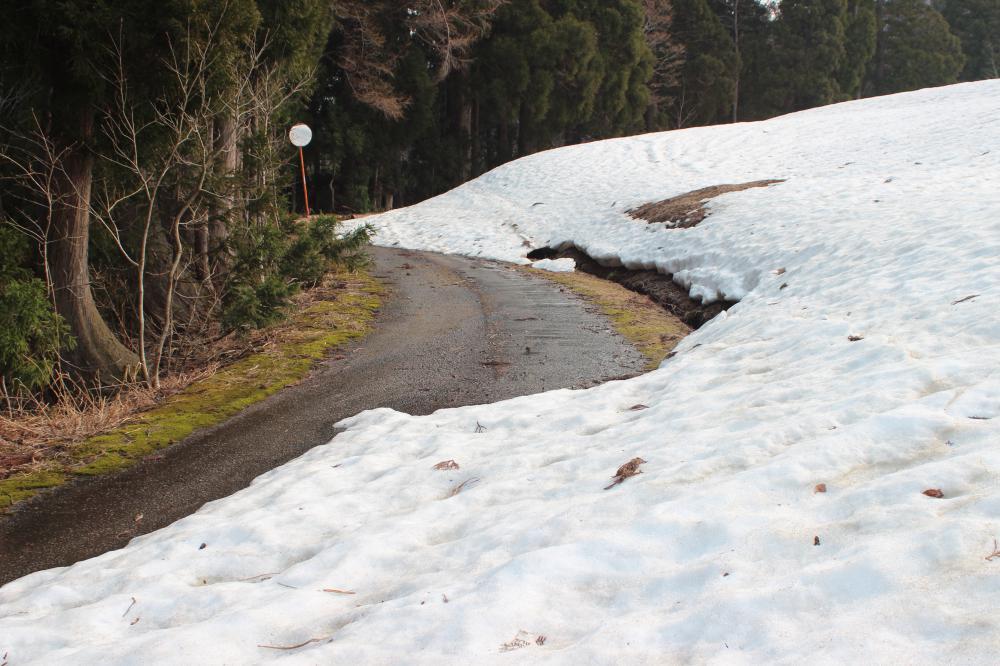 山も生き物も動き出す春になりましたが…山の学校も休校です!:画像