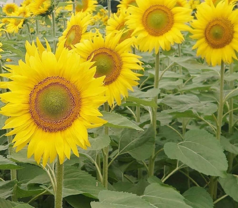 花が伝える季節