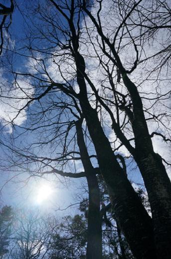 晴れた冬の日