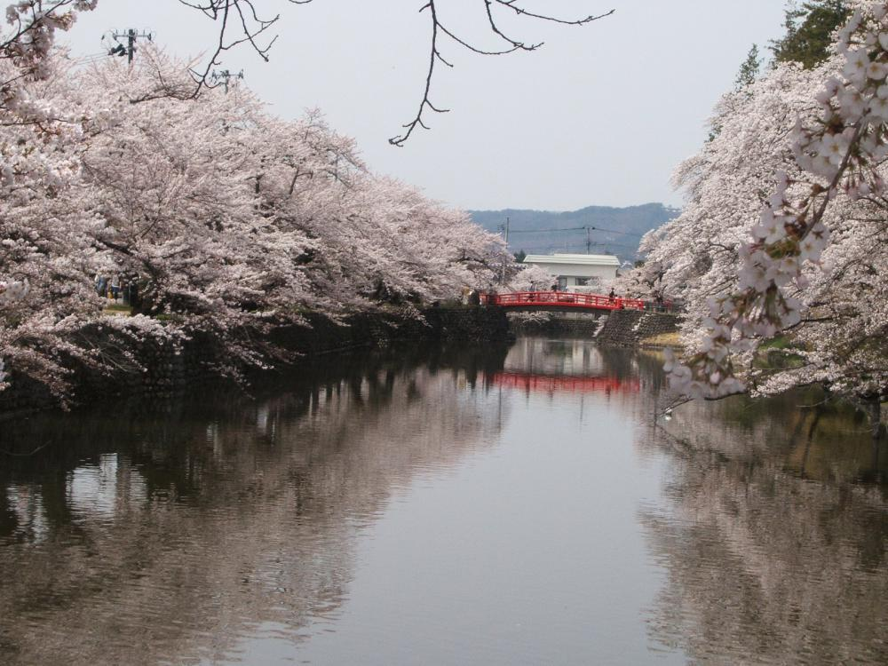 Matsugasaki Park - 'The Picture of Japanese Spring the World Needs to See.""