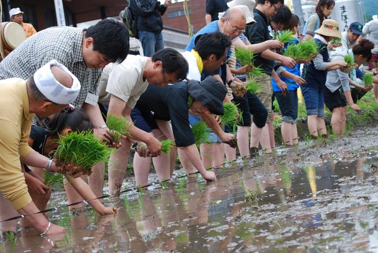 米鶴酒造 田植え祭(5月下旬):画像