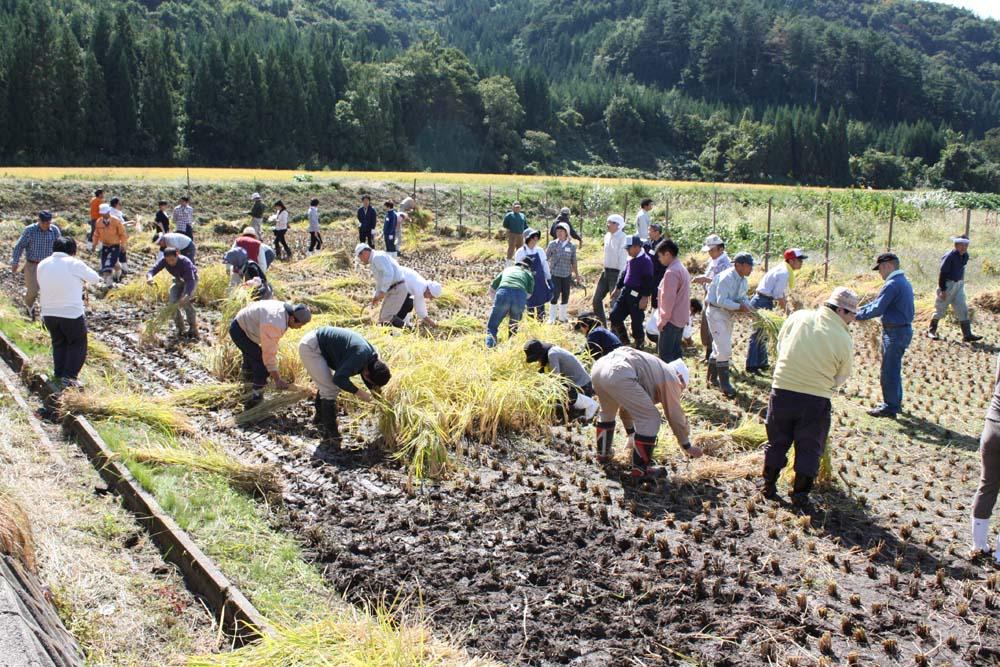 米鶴 収穫祭にご参加いただきありがとうございました!:画像