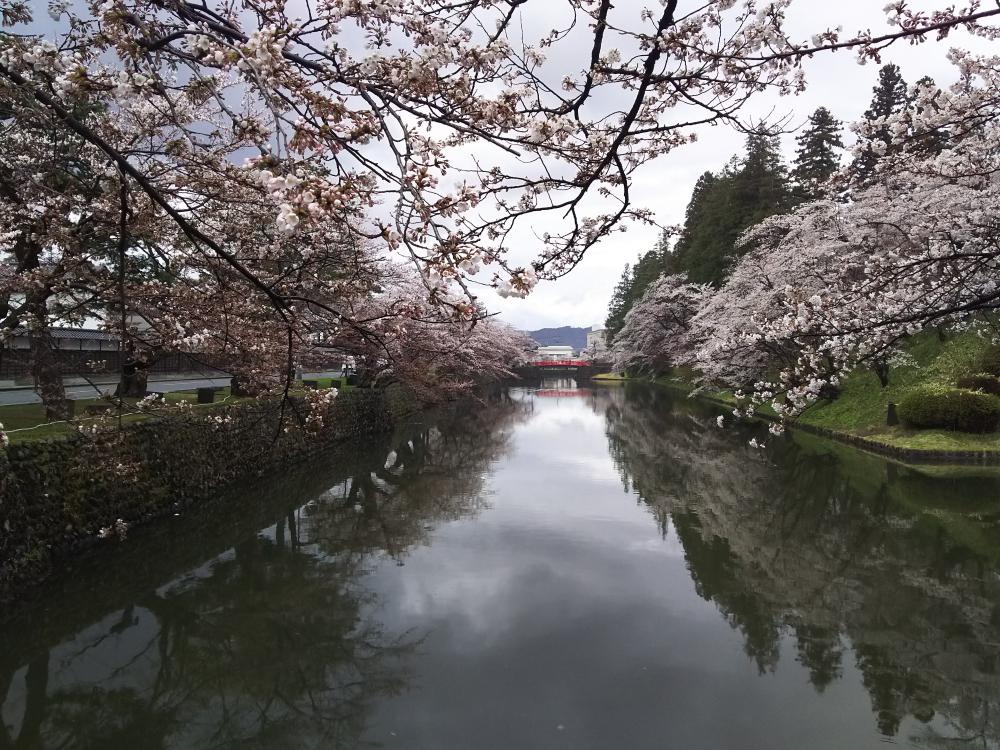 It blooms for from six minutes to eight minutes on Matsu-ga-saki Park (Uesugi Shrine) cherry tree information April 15 in 2018 (full bloom): Image