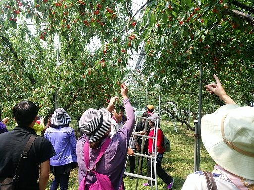 Cherry Garden information of 2018 Yonezawa-shi: Image