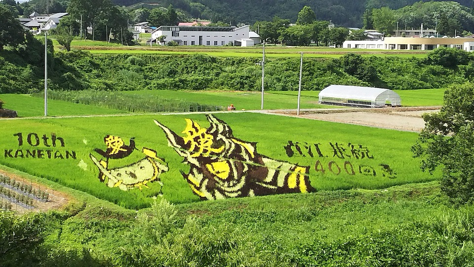 Please see change of Yonezawa rice field art with live camera! : Image