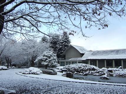 【ユーカリの記 その36】雪が降りました