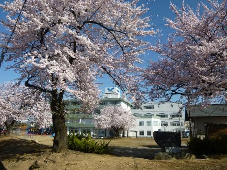 春の訪れ:画像