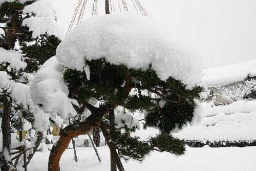 ついに冬到来 でも例年に比べると雪は少ないかな~