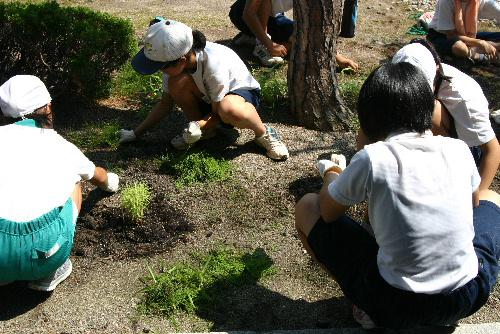 ありがとう 赤湯小中学生が合同ボランティアで記念館の庭の除草