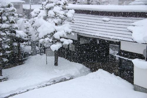 一日中の雪で、すっぽりと雪に覆われました