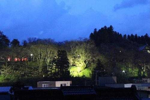 烏帽子山公園の桜がライトアップ