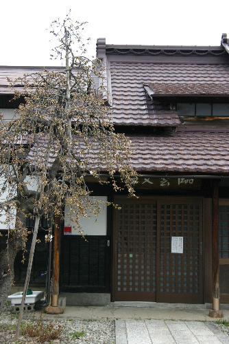 臨雲文庫前の桜が開花