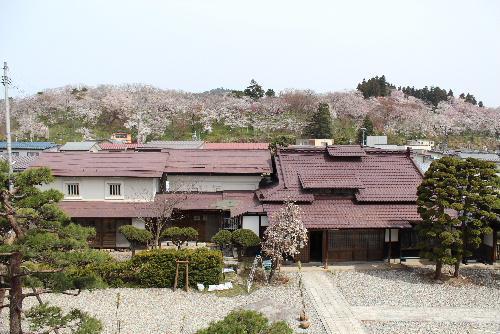 今日「17日の烏帽子山公園」の桜情報 記念館2階の窓から/