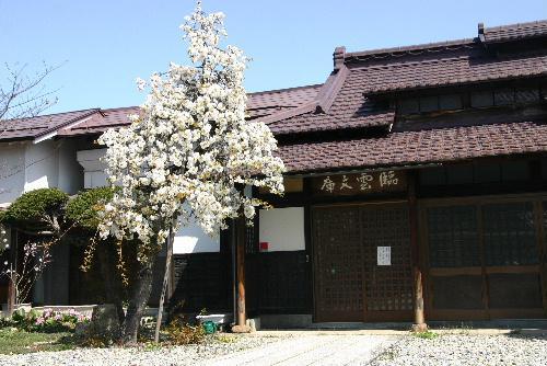 烏帽子山公園の桜が満開 2階の窓が絶景のビューポイント おいでをお待ちしています