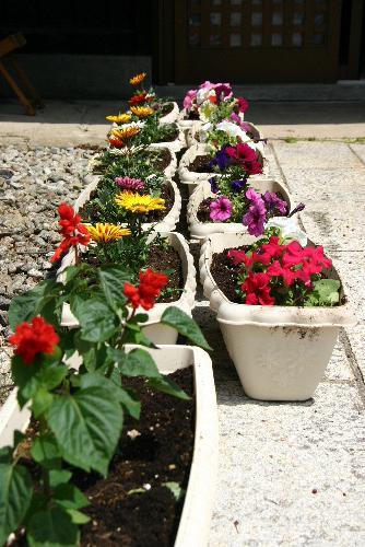 赤湯地区花いっぱい運動に参加 炎天下の花苗の植栽