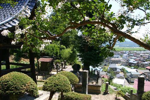 東正寺の結城翁の墓地「柳子地蔵尊」の覆いを修理  東正寺に真っ白な百日紅