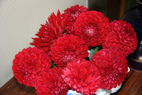 秋のたより 市民から見事なダリアの花が届く