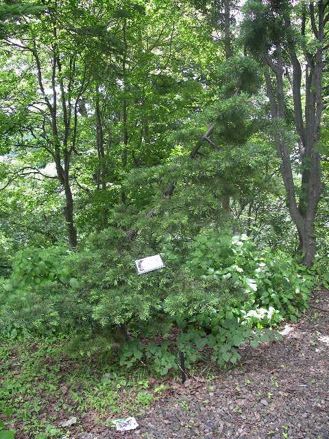 酢川温泉神社境内に植えた記念植樹です!