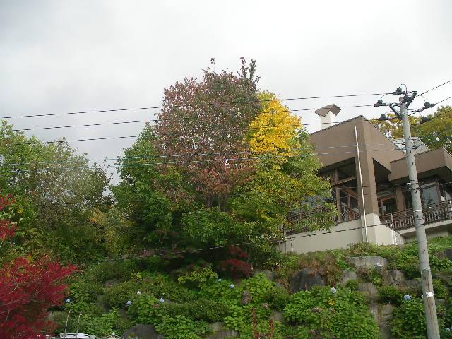 紅葉の蔵王には紫陽花が咲いています!