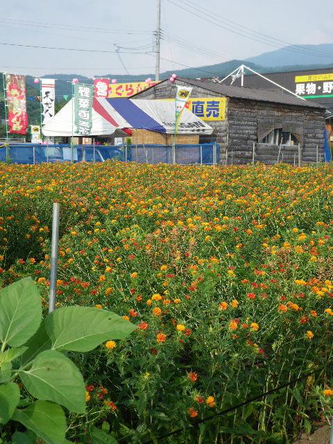 農家の店 菜果園
